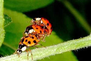Polyamory kommt manchmal scheinbar auch in der Tierwelt vor... © J.P.W. Peters / PIXELIO