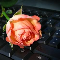 Computer und Rose, Foto: pixelio/Rosel Eckstein