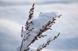Am Wochenende soll es bis zu 10 Zentimeter Neuschnee geben. Foto: gcardinal