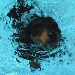 Schwimmen - die beste Erfrischung an heißen Tagen. Foto: pixelio/Kuno Hartmann.