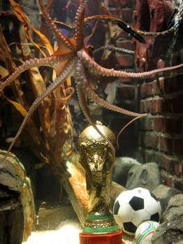 Er bestimmte, wer den Pokal in Händen halten dürfte: Krake Paul. Foto: Wikipedia