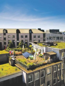 Dachbegrünung als Wärmedämmung. Foto: InnovationCity Ruhr