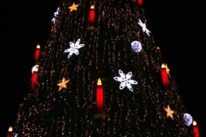 Woher kommt eigentlich der Weihnachtsbaum?