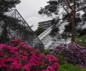 Blick auf die Gewächshäuser des botanischen Gartens, in denen die Duftausstellung momentan gastiert. Foto: Paul Crone