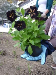 Guerilla-Gärtner pflanzen auch bei hellem Tageslicht. Foto: Jana Hoffmann