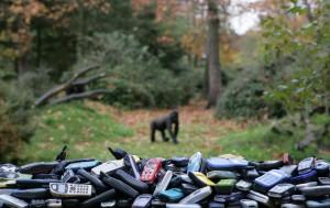 Der niederländische Zoo Apenheul hat viele Handys zugunsten der Gorillas gesammelt. Foto: Apenheul