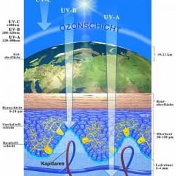 UV-A- und UV-B-Strahlen verursachen verschiedenen Schäden an der Haut. Foto: Arbeitsgemeinschaft Dermatologische Prävention