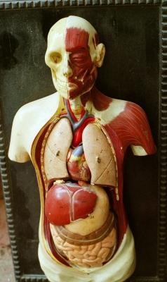 Mensch Anatomie | pflichtlektüre