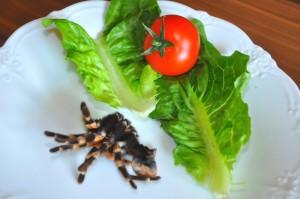 Vogelspinnenhaut zu frischem Salat - eine Alternative für die Zukunft?