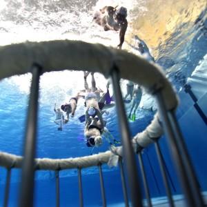 Das Ziel beim Unterwasserrugby ist der Korb.