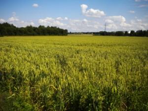 Landwirtschaft_Felder