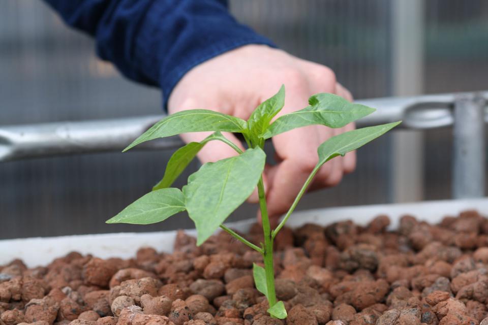 Pflanzen-und-Hand