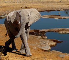 Namibia im Lebenslauf