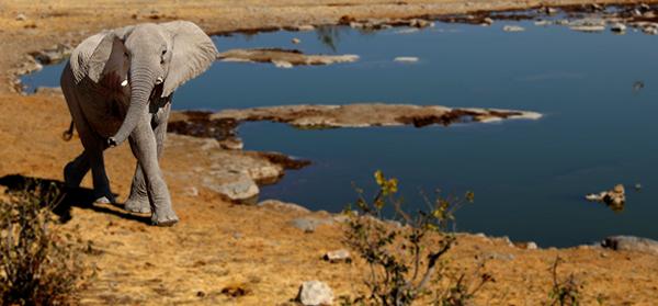 Elefant Aufmacher Namibia