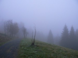 141024_Nebel_3_abejorro34