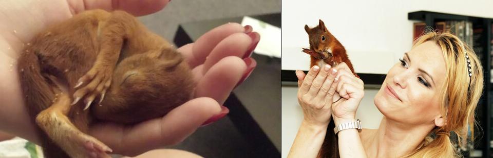 Alexa und die Aufzucht von Eichhörnchen