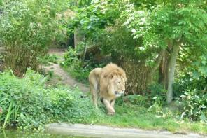 Ob Zoos helfen oder schaden