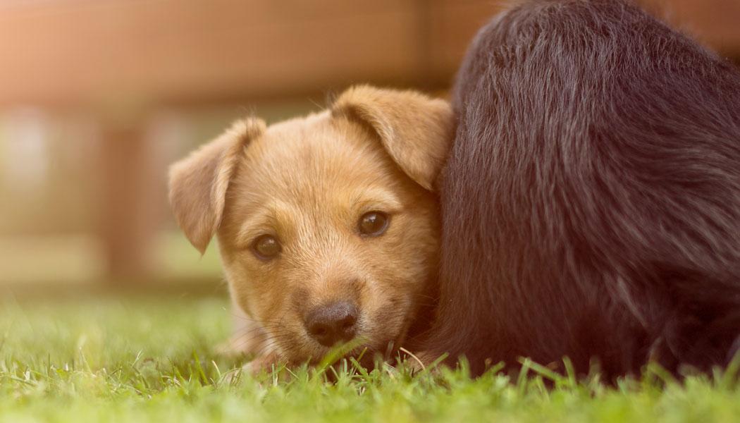 Hundewelpen sollen gegen Stress an der Uni helfen.