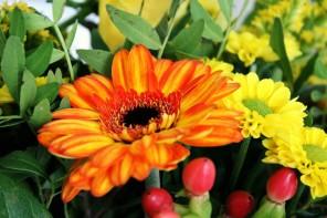 Wissenswert: Hält Viagra Blumen länger frisch?