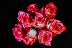Duell am Valentinstag: Nur Kommerz oder wahre Liebe?