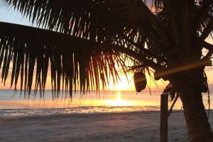 Sonnenuntergang hinter einer Kokospalme