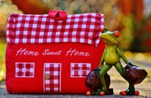 home-sweet-home-frosch