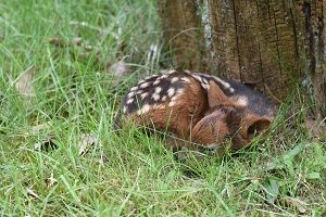 Nachwuchs: Pudu-Jungtier im Dortmunder Zoo