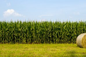 Was bringt die neue Nachhaltigkeit?